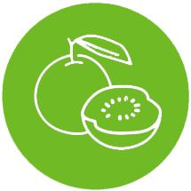 Semena konoplje Peyote Cookies