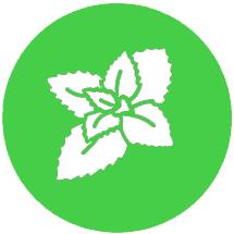 Semena konoplje Green Gelato