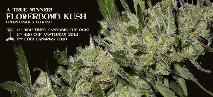Flowerbomb Kush