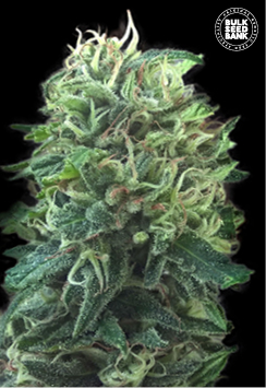 Green Scout Cookies
